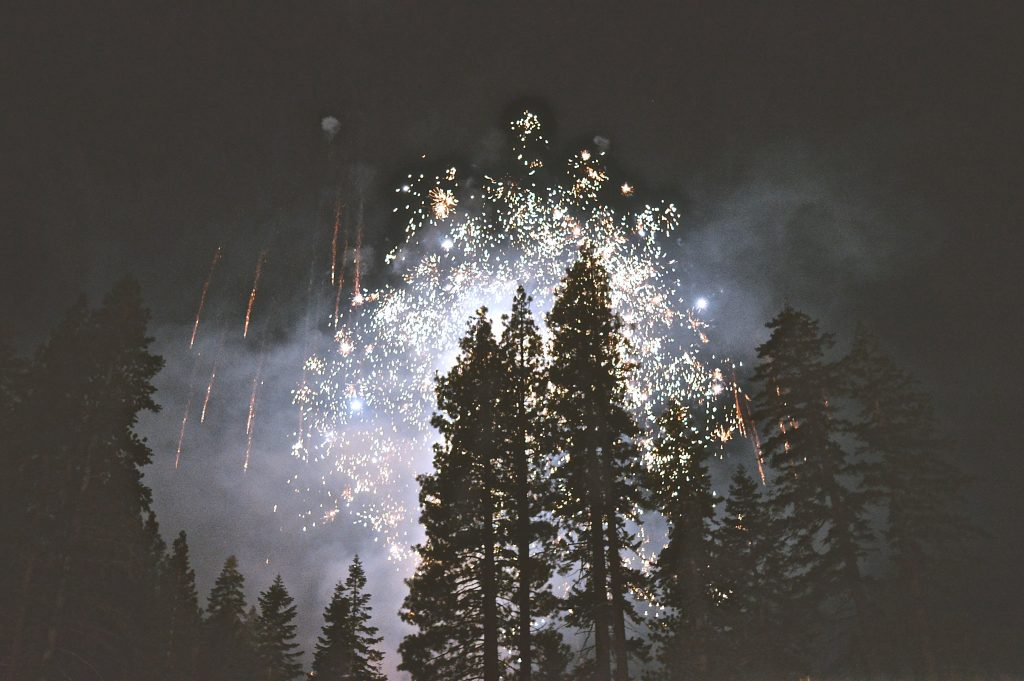 Fireworks shows over trees