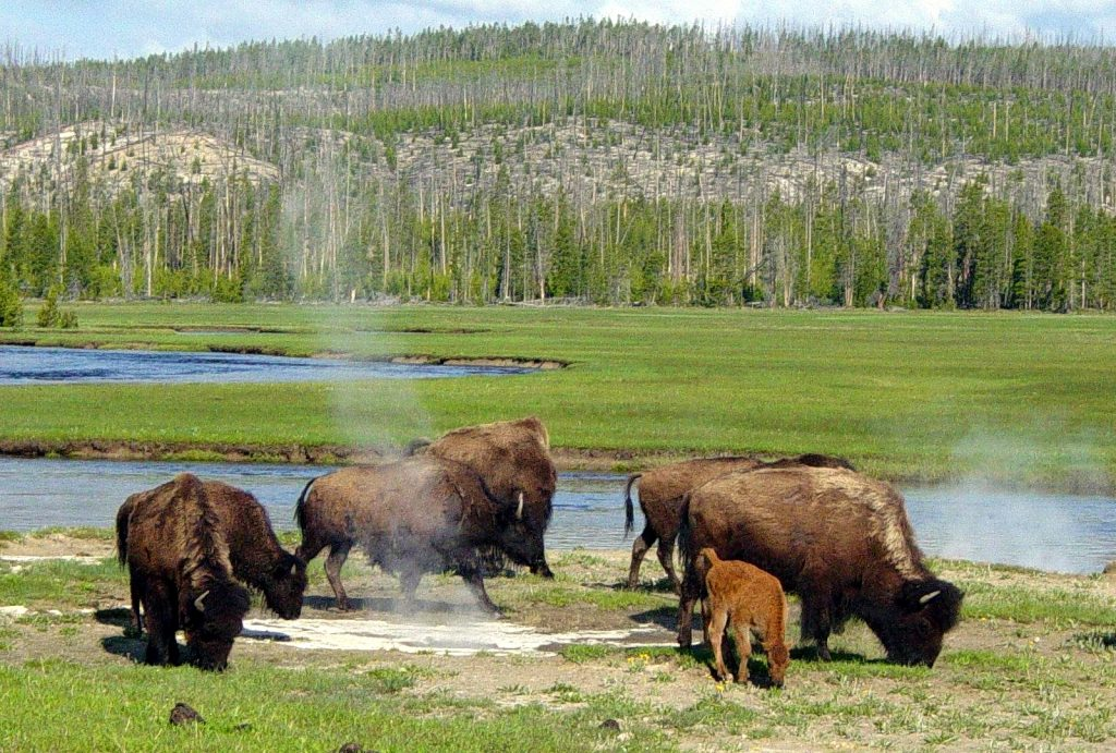 Yellowstone is one of the great honeymoon destinations.